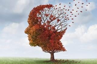 memory-brain-function_742675